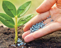 Fertilizante Test UY mas uno