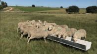 Comedero Fibrocemento Para Ganado Ovino/bovinos