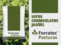 Pastura Lotus Corniculatus Jagüel