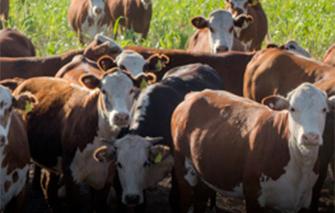 Insumos para ganaderia en venta